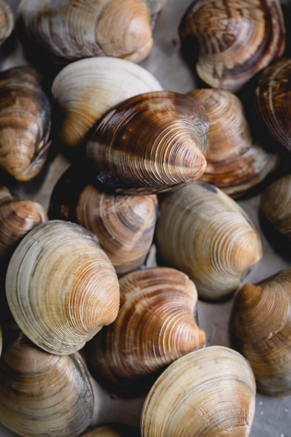 Learn how to clean little neck clams and never have gritty clams again! A little bit of soaking in water will easily degrit clams for your next soup, salad, or pasta dish. #littleneckclams #shortneckclams #tutorial #clams #seafood